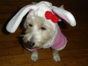 Maddy_bunny_2